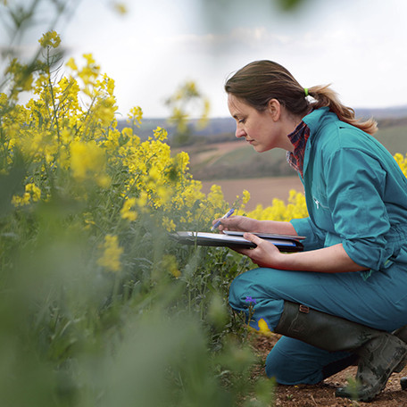 Farmer examining rapeseed and taking notes on a clipboard