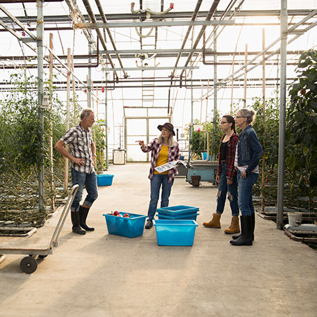 Researchers and farmers in a greenhouse