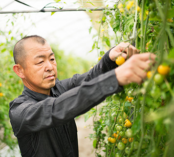 Farmer in a greenhouse examining fruit crop