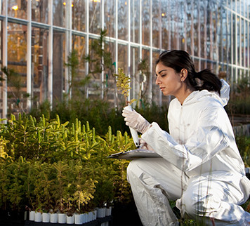 Scientist in a white coat examining crop